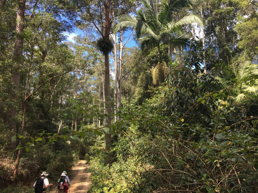 First bushwalk – Sunday Creek Fire Tower Site and on